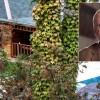 Jamal Khashoggi: Saudi journalist's body parts found, say Sky sources