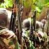 DAAWO: Al-Shabaab & beesha Xawaadle oo go'aan halis ka gaaray Itoobiya & Jabuuti